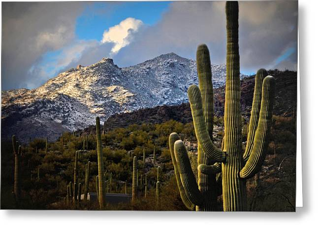 Snow On The Catalina Mountains Greeting Card by Jon Van Gilder