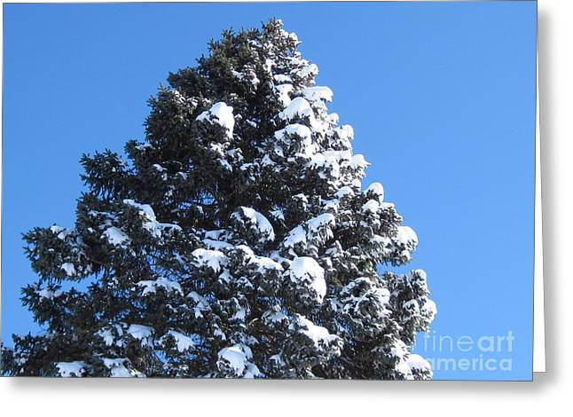 Snow On The Pine Greeting Card by Donna Cavender