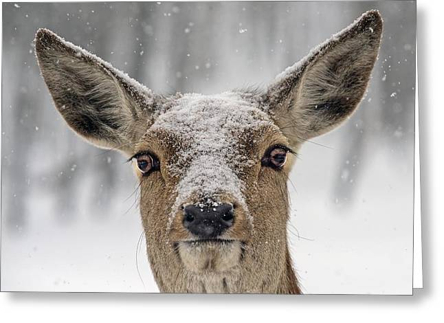 Snow On The Roof Greeting Card by Tony Beck