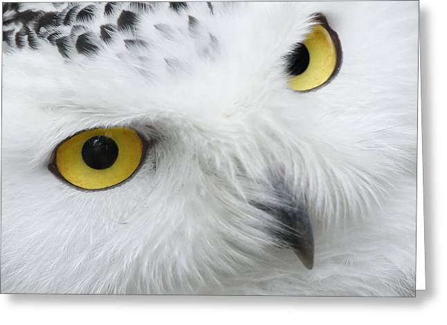 Snow Owl Eyes Greeting Card
