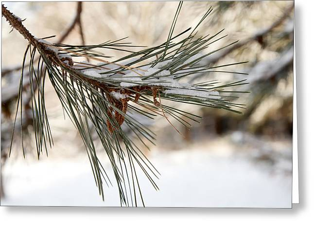 Greeting Card featuring the photograph Snow Pine by Courtney Webster