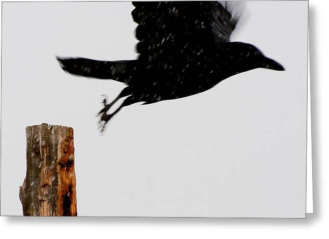 Greeting Card featuring the photograph Snow Raven Blurr by Britt Runyon