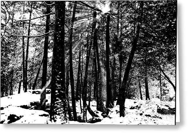 Snow Shower Greeting Card by Debbie Oppermann
