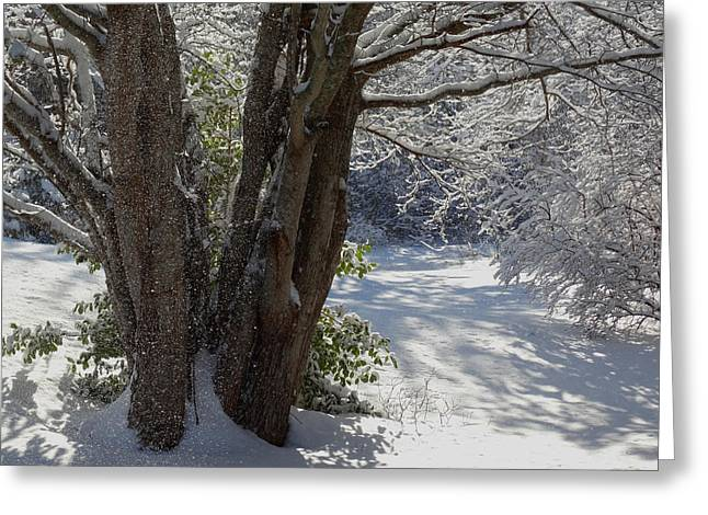 Snow Sparkles Greeting Card by Dianne Cowen