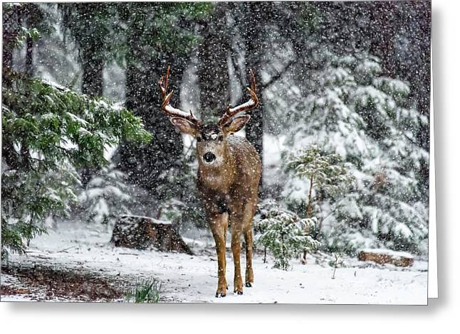 Snow Storm And The Buck Deer Greeting Card