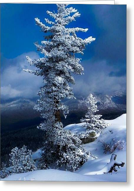 Snow Storm Tree Greeting Card