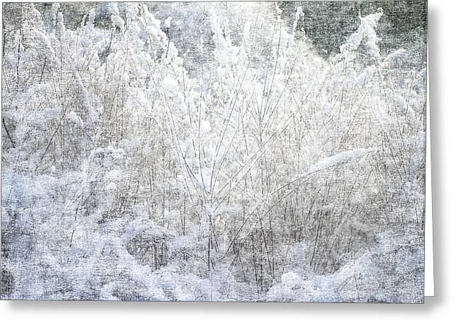Snow Textures Greeting Card by Suzanne Powers