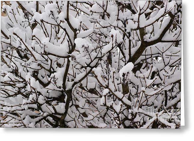Snow Tree Greeting Card by Carol Lynch