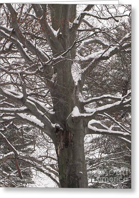 Greeting Card featuring the photograph Snow Tree by Melissa Stoudt