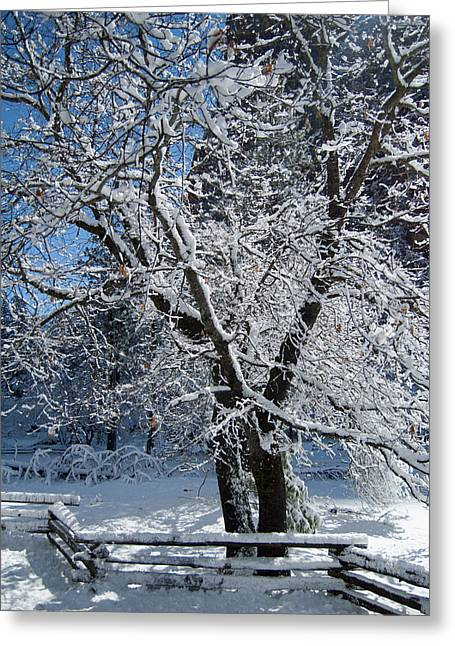 Snow Tree - Yosemite National Park Greeting Card by Jim Pavelle
