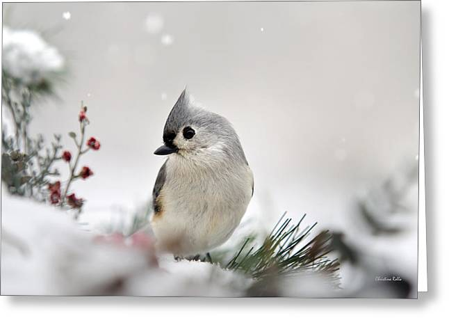 Snow White Tufted Titmouse Greeting Card by Christina Rollo