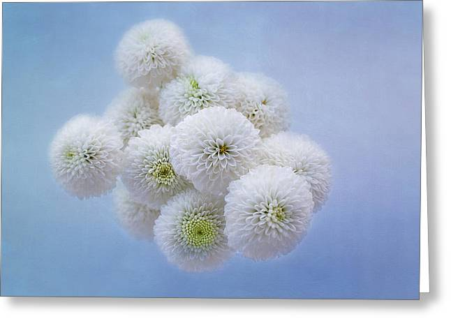 Snowballs-pom Mum Greeting Card