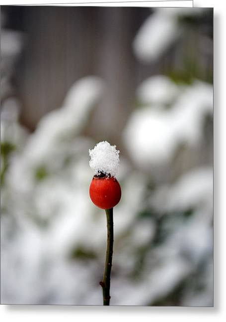 Greeting Card featuring the photograph Snowcap by Kelly Nowak