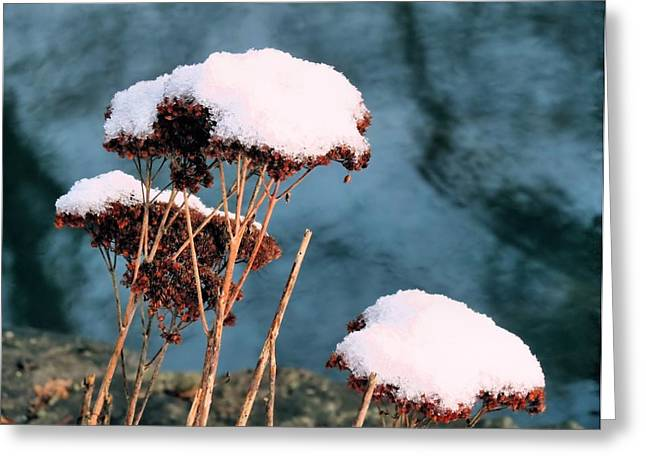 Snowcapped Greeting Card by Janice Drew