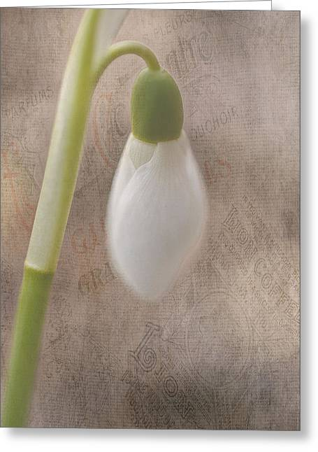 Snowdrop Bud Greeting Card by Faith Simbeck