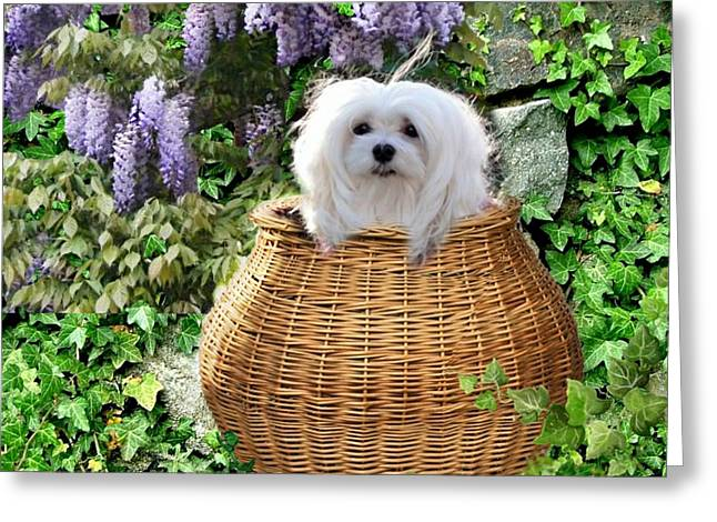 Snowdrop In A Basket Greeting Card
