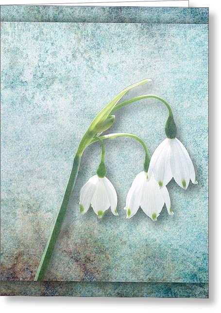 Snowdrop Greeting Card by Lynn Bolt