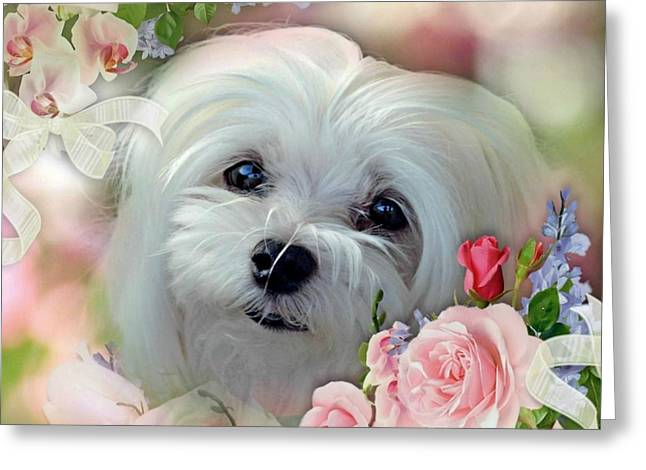 Greeting Card featuring the photograph Snowdrop The Maltese by Morag Bates
