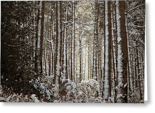 Greeting Card featuring the photograph Snowed Forest by Antonio Jorge Nunes