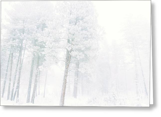 Snowed In Greeting Card by Tara Turner