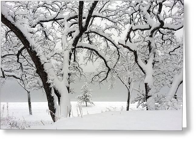 Snowfall Greeting Card by A K Dayton