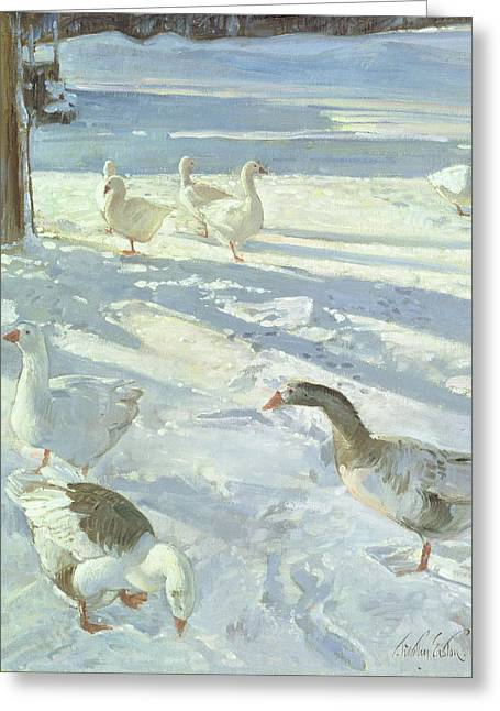 Snowfeeders, 1999 Oil On Canvas Greeting Card by Timothy Easton