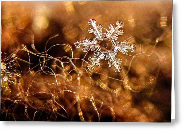 Snowflake On Brown Greeting Card