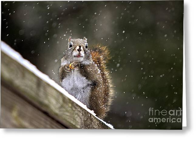 Snowflake Squirrel Greeting Card