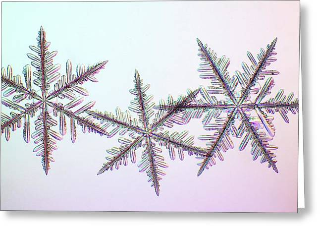 Snowflakes Greeting Card by Kenneth Libbrecht