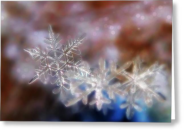 Snowflakes Greeting Card by Lorella  Schoales