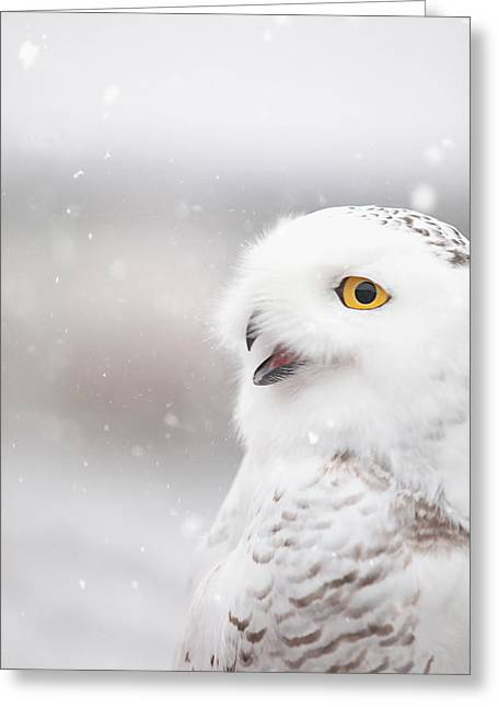 Snowie In The Snow Greeting Card