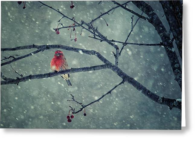 Snowing Greeting Card by Yu Cheng