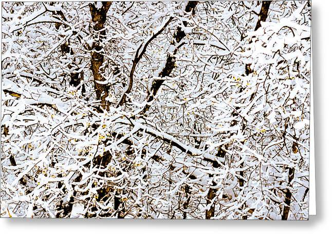 Snow Lines Greeting Card by Southwindow Eugenia Rey-Guerra