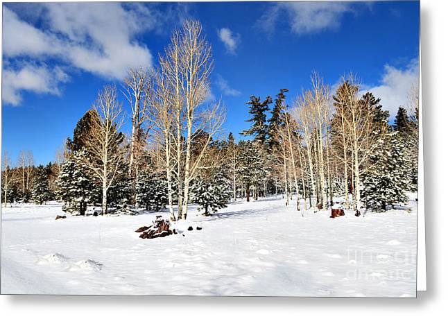 Snowy Aspen Grove Greeting Card