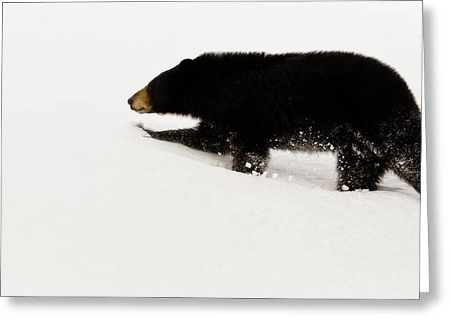 Snowy Bear Greeting Card