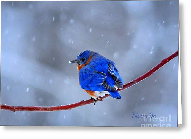 Snowy Bluebird Greeting Card by Nava Thompson