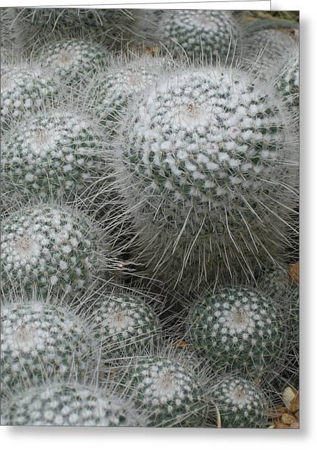Snowy Cactus  Greeting Card