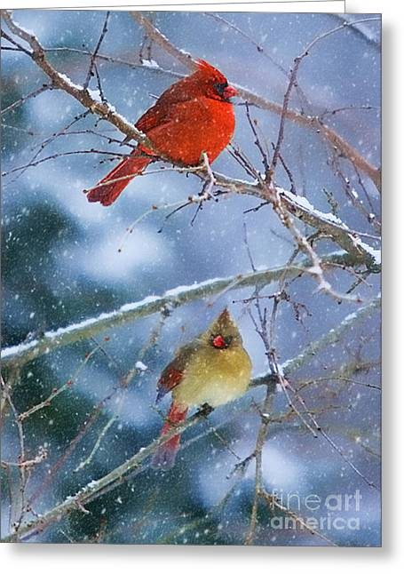 Greeting Card featuring the photograph Snowy Cardinal Pair by Clare VanderVeen