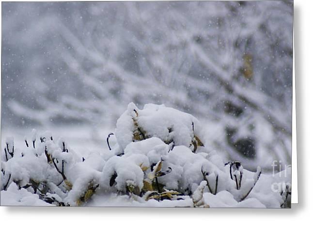Snowy Greeting Card by Carol Lynch