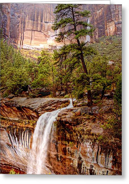Snowy Day In Zion Greeting Card by Darryl Wilkinson