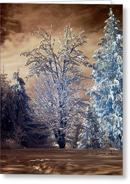Greeting Card featuring the photograph Snowy Day by Rebecca Parker