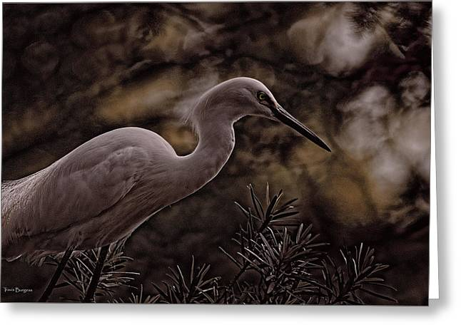 Greeting Card featuring the photograph Snowy Egret 002 by Travis Burgess