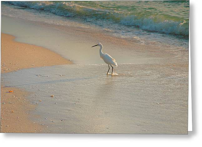 Snowy Egret In Surf II Greeting Card by Steven Ainsworth