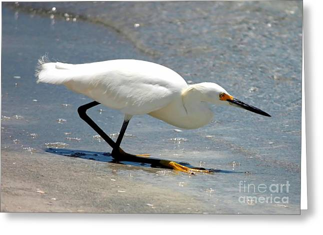 Snowy Egret In The Surf Greeting Card