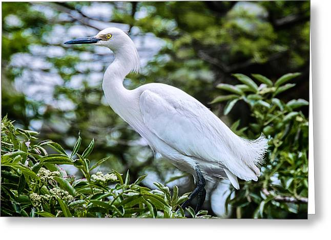 Snowy Egret In Trees Greeting Card
