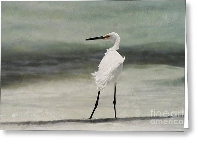 Snowy Egret Greeting Card by John Edwards