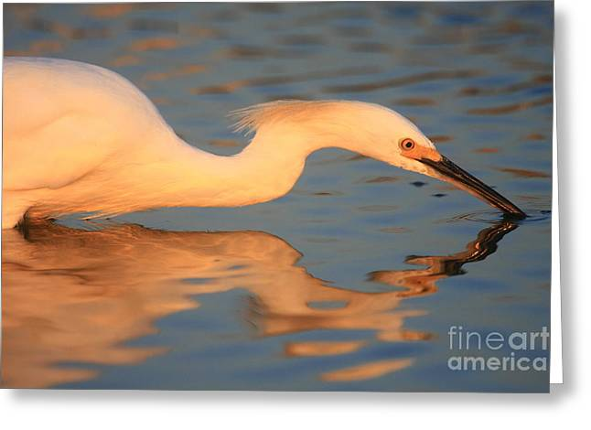 Snowy Egret Mirror Greeting Card