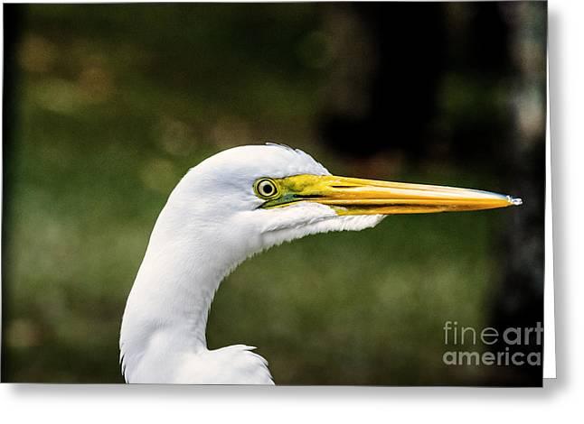 Snowy Egret Profile Greeting Card