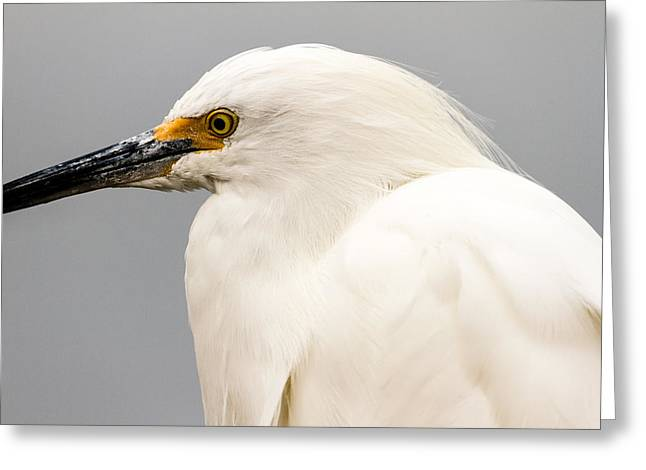 Snowy Egret Profile Greeting Card