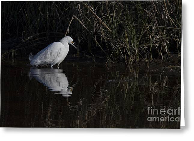Snowy Egret Greeting Card by Twenty Two North Photography